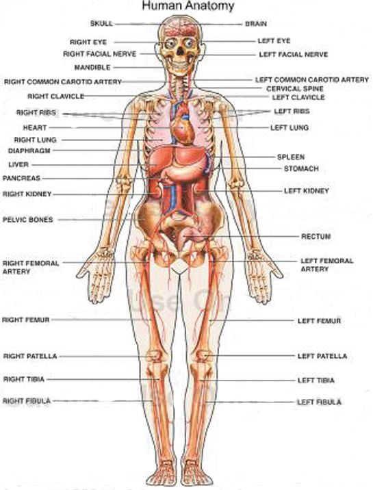 The o'jays, Human body organs and Human body on Pinterest