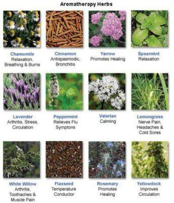 Common therapeutic uses