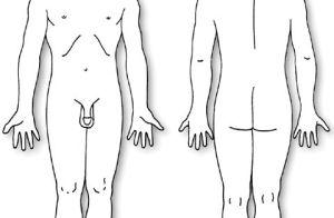 Human Body Diagram | body diagram: male | pain dr