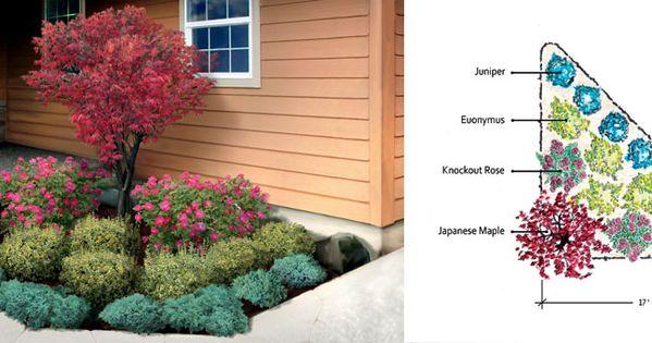 Evergreen Shrub For Corner Of House Landscape Garden