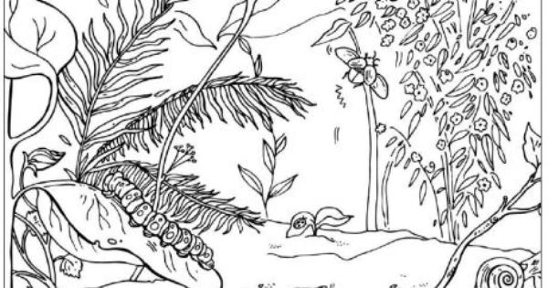 Minibeasts Colouring Page Mini Beasts Pinterest