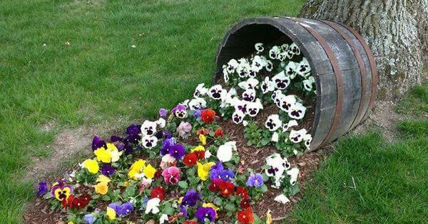 Flowers Spilling Out Of Barrel. This But The Bucket At An