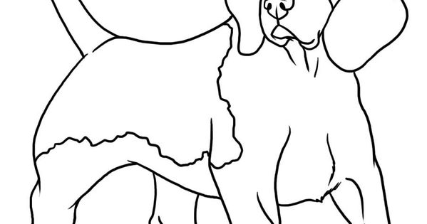 beagle coloring pages  beagle coloring page pic #