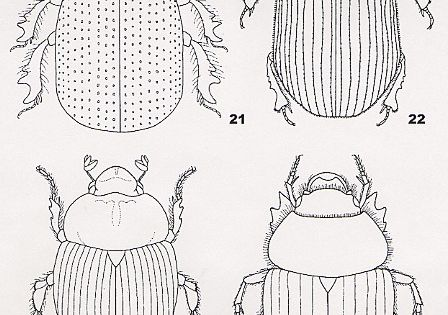 Coloring Pages For Kids Egypt Dung Beetle Scarab