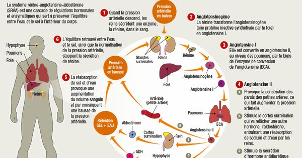 Sel et hypertension | LE CORPS HUMAIN... | Pinterest