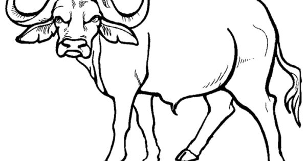 african buffalo pages coloring pages
