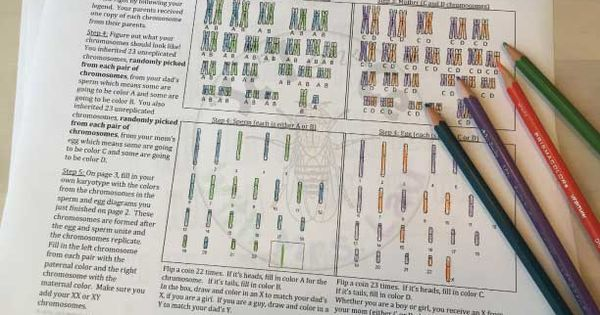 Color Your Own Karyotype Independent Assortment Lesson