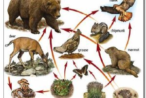 food web | Food chain | Pinterest | Sun, Game cards and