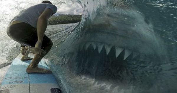 WORLDS BIGGEST SHARKS Are Still In The Ocean MEGALODONS