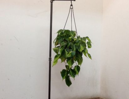 This free standing plant stand is great for hanging plants ... on Stand For Hanging Plants  id=60541