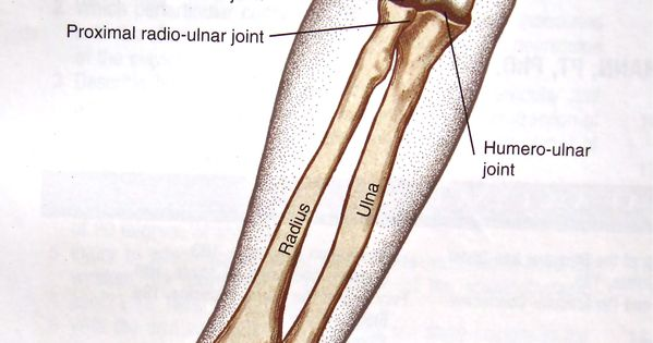 vague elbow-forearm complex (note to self: basic joint ...