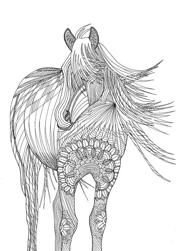 43 Besten Pferde Bilder Auf Pinterest