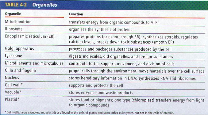 human cell parts and their functions google search on cell wall function id=58131