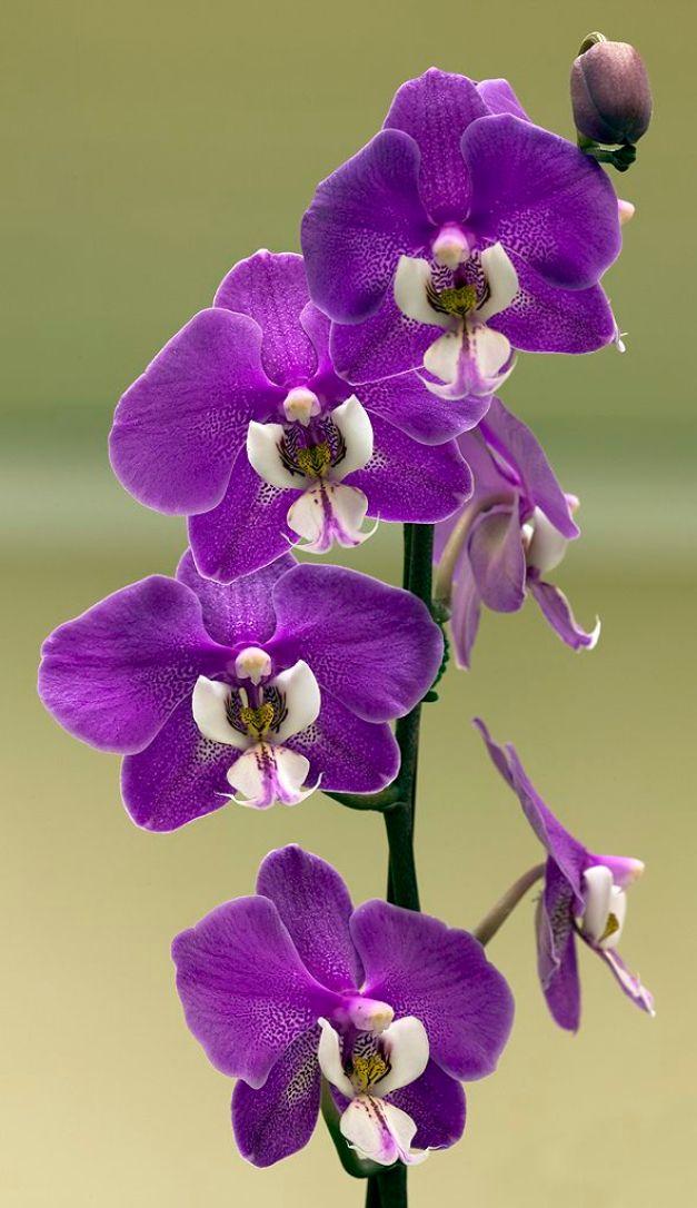 Come coltivare con successo le orchidee guida giardino - Orchidee da esterno ...