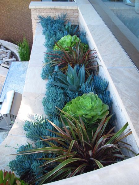 modern succulent garden ideas 118 best images about CA Friendly® Gardening Landscapes by