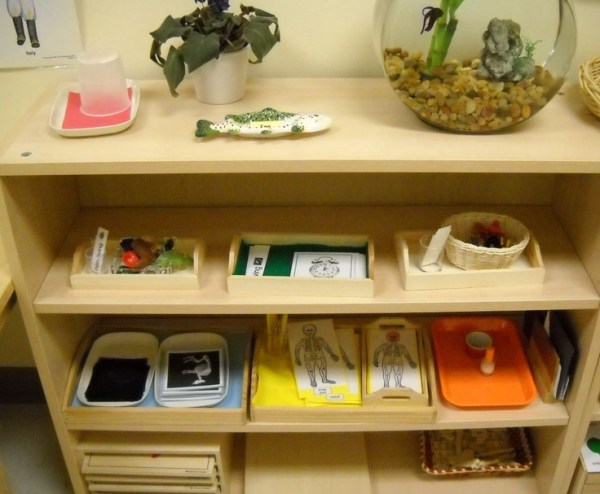 153 best Montessori: Science images on Pinterest