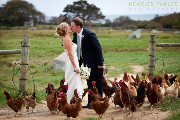 Image result for wedding chickens
