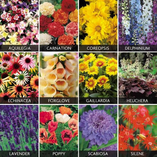 cottage garden plant list Spectacular Perennials Collection - Cottage Garden Plants
