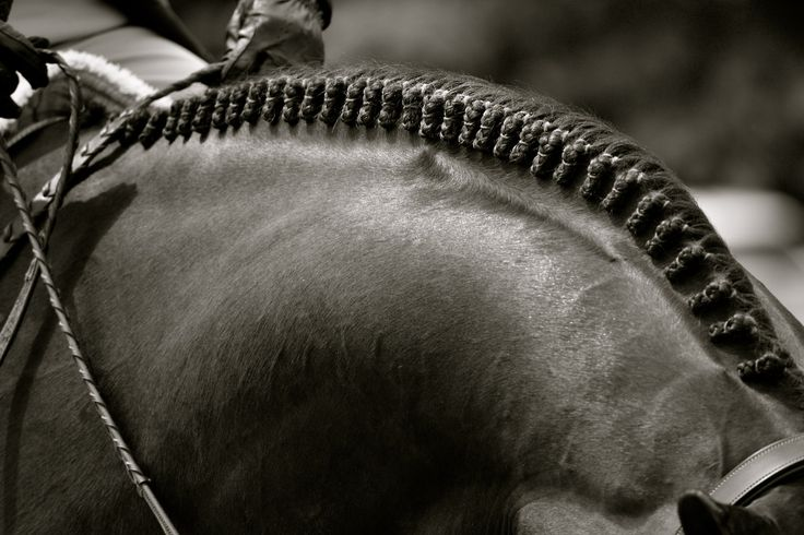 Braids Horses Pinterest Beautiful Just Love And I Love