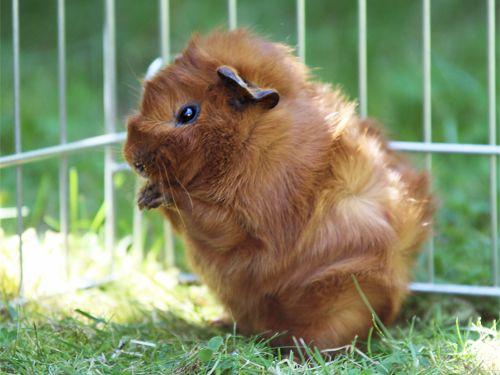 25 Best Ideas About Cute Piggies On Pinterest Baby Pig
