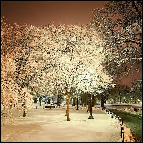 Boston Common In Winter Awesome Pinterest Miss You