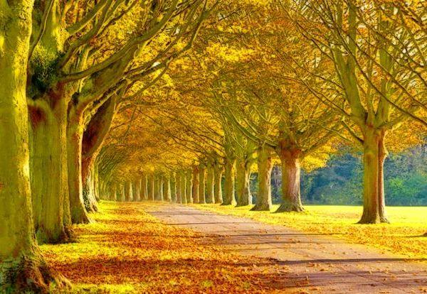 Nature benefits