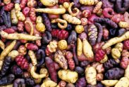 Image result for rare potato varieties
