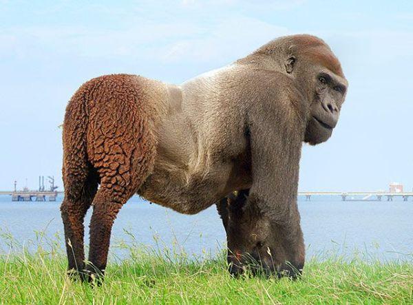 Real Human Animal Hybrid Strange Animal Hybrids