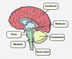 Deficits after a Stroke according to its location  NeuroAiD BlogStroke Recovery Blog | Aphasia