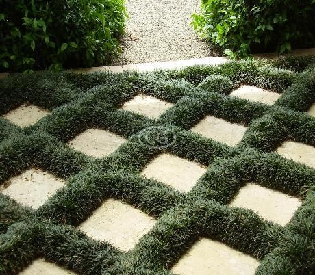 dwarf mondo grass this could be my new favorite ground on classy backyard design ideas may be you never think id=58599