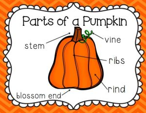 parts of a pumpkin | Teachers Notebook Lessons and Units