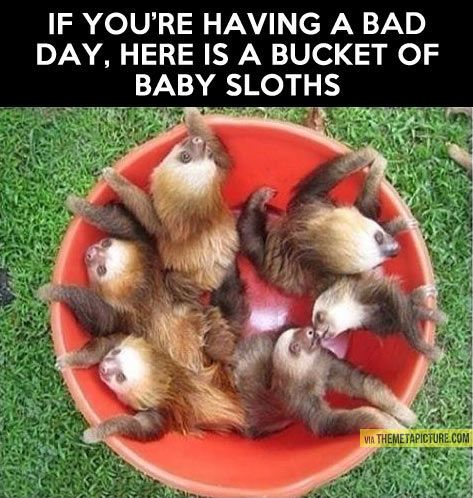A bucket of baby sloths!