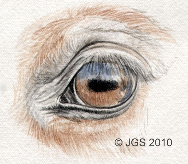 How Can You Draw Horse Eyes With Colored Pencils Colors