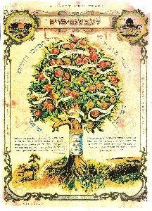 Old Jewish Shana Tova Card Hebrew I Wish You Old
