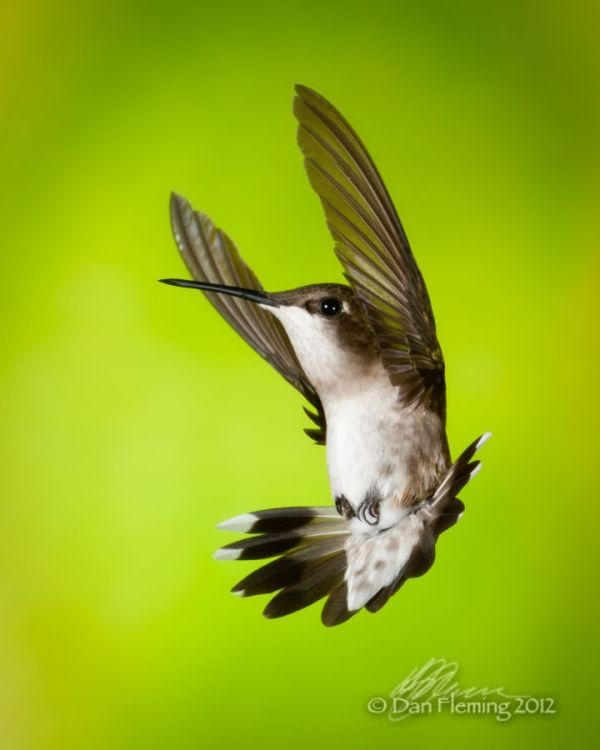 669 best images about Nature on Pinterest | Washington ...