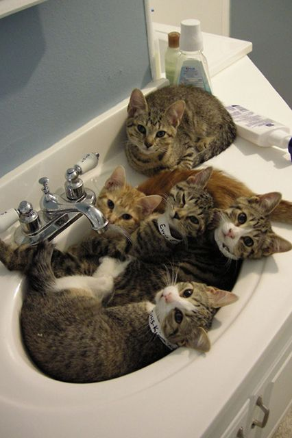 """17 Cats Who Know That The Sink REALLY Belongs To Them #refinery29  http://www.refinery29.com/the-dodo/135#slide-15  """"Sinks are the perfect size for group snuggles."""""""
