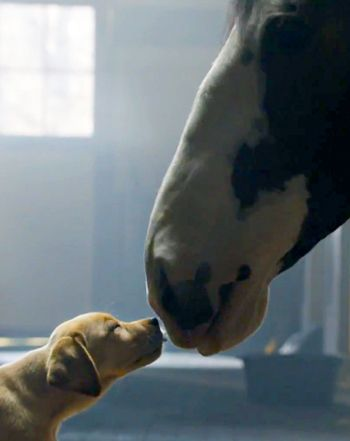 "Budweiser ""Puppy Love"" Super Bowl Commercial: Watch Best Buds Ad Now! – Us Weekl"