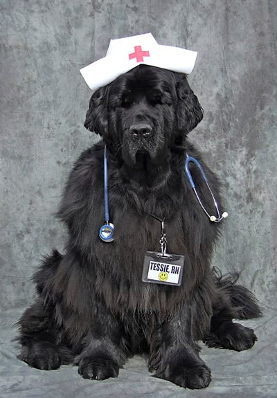 BLACK PAW STUDIO Amherst NH Roys Dog Dreams