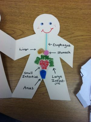 10 Best images about Digestive System on Pinterest   Studentcentered resources, Human body and