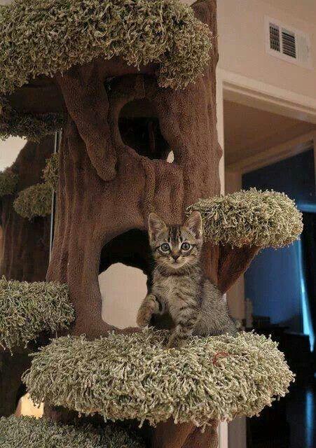 17 Best Images About Indoor Pet Ideas On Pinterest Cat