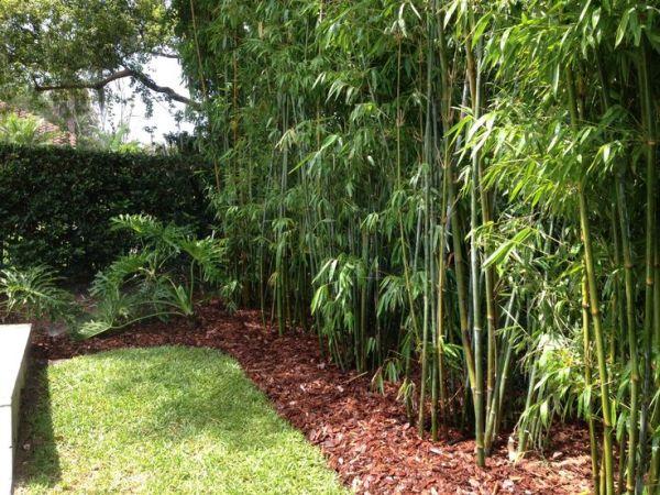 bamboo privacy garden Landscape Design, Bamboo, Irrigation Design   BLG