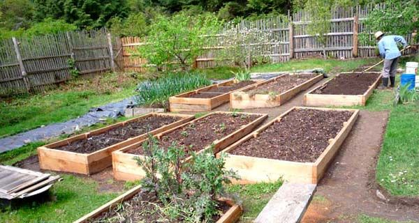 Raised Vegetable Garden Construction
