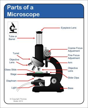 Microscope  diagram Tom Butler | Technical Drawing and