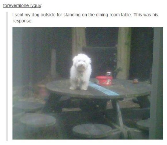 Rebel dog: Like A Boss, Dining Rooms, Funny Dogs, Smart Dogs, Funny Pics, Funny Pictures, Well Plays, Funny Stuff, Animal