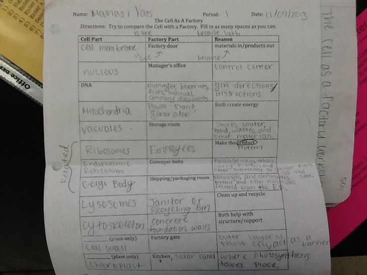 the instructions for the cell as a factory worksheet were on cell wall function id=85080