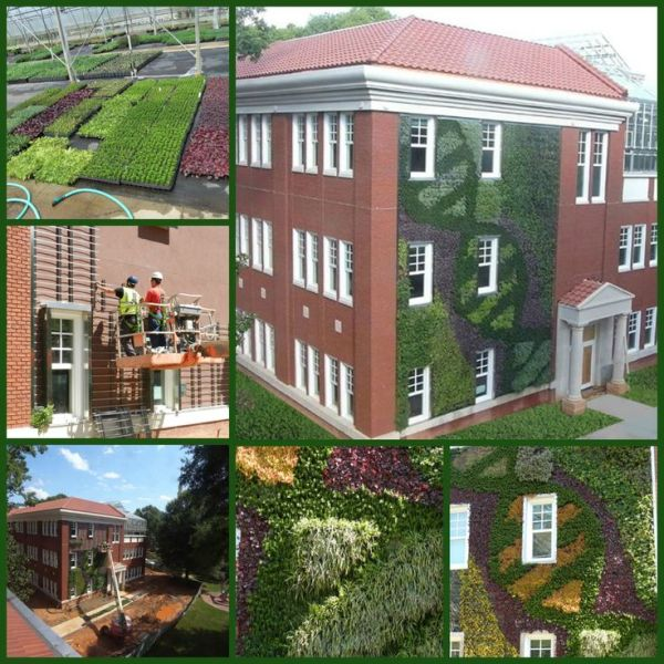 vertical garden institute 1000+ images about Vertical Gardens on Pinterest | Plant