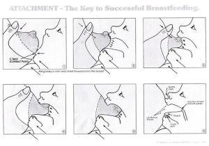 Correct Latch diagram | #babygottaboob breastfeeding