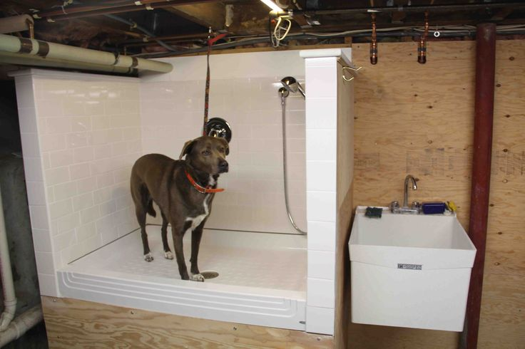 How To Build A Dog Wash Sta