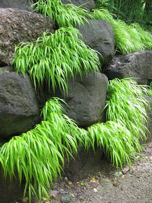 1000 images about moss shade rock gardens on pinterest on hole in the wall cap oriental id=47603