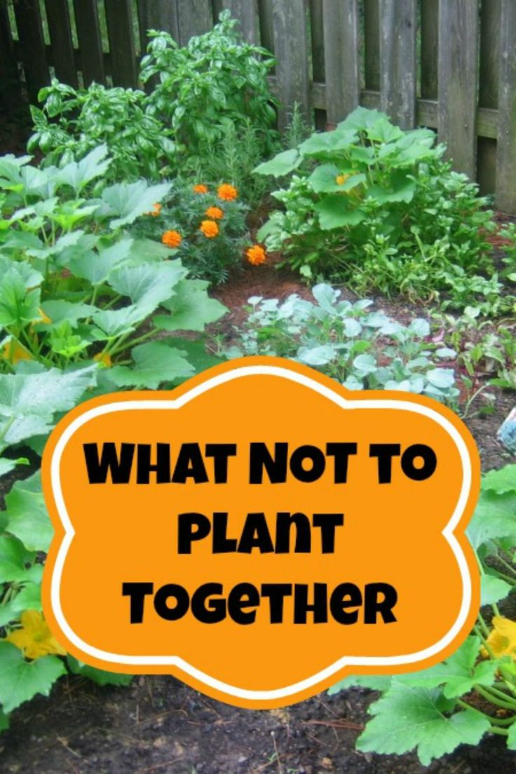 Often times when we talk about Companion Planting we discuss the plants that should always be planted side-by-side in our gardens.